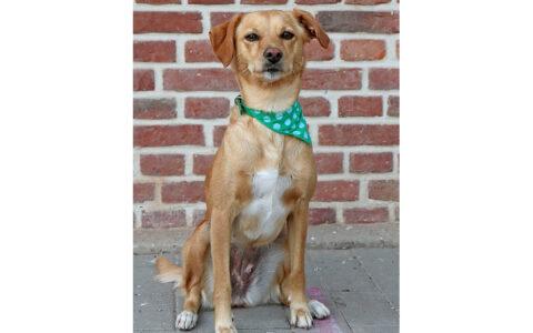 Frida - Bürohund